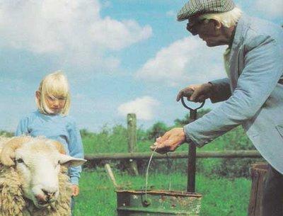 Grandpa feeding sheep