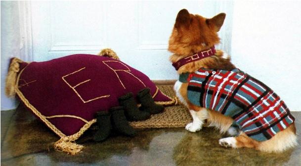 dog pillow and tartan