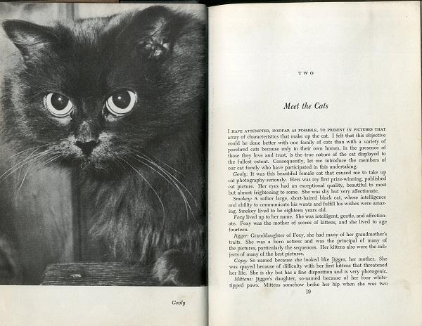 Meet the Cats