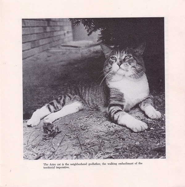Picture of Aries cat