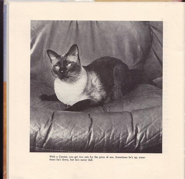 Picture of Gemini cat