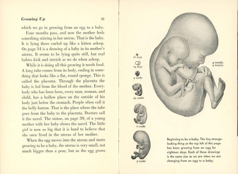 developing fetus